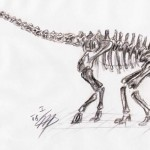 Diplodocus species