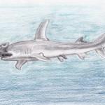 Großer Hammerhai (Sphyrna mokarran)