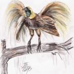 Großer Paradiesvogel (Paradisaea apoda)