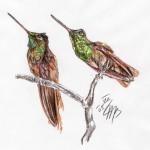 Grünroter Andenkolibri (Coeligena iris)