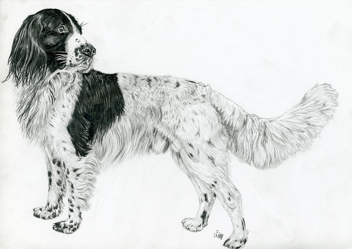 Haushund (Canis lupus familiaris)