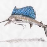 Indopazifischer Fächerfisch (Istiophorus platypterus)