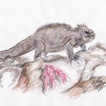 Meerechse (Amblyrhynchus cristatus)
