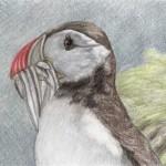 Vögel (P bis R)