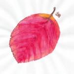 Prunus species