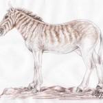 Quagga (Equus quagga quagga)
