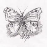 Tagpfauenauge (Inachis io)