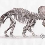 Triceratops elatus