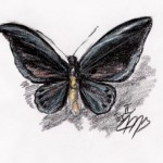 Vogelflügler (Ornithoptera species)