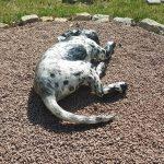 Haushund 'Flash' (Canis lupus familiaris)
