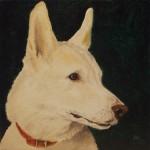 Haushund 'Hoss' (Canis lupus familiaris)
