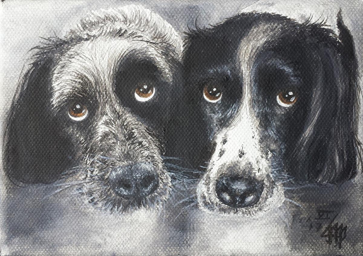 """Haushunde """"Flash"""" und 'Léon' (Canis lupus familiaris)"""