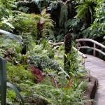 Botanischer Garten (Berlin)