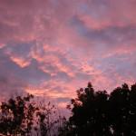 Abendhimmel (Halle (Saale))