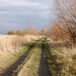 Feldweg (Strengsee)
