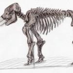 Amerikanisches Mastodon (Mammut americanum)