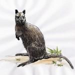 Bennett-Känguru (Macropus rufogriseus rufogriseus)