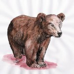 Braunbär (Ursus arctos)