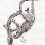 Eigentlicher Bärenkuskus (Ailurops ursinus)