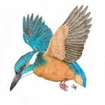 Vögel (A bis E)