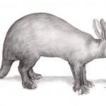 Erdferkel (Orycteropus afer)