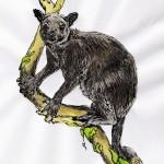 Graues Baumkänguru (Dendrolagus inustus)