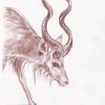 Großer Kudu (Tragelaphus strepsiceros)