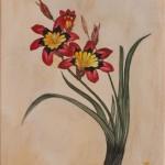 Dreifarbiges Fransenschwertel (Sparaxis tricolor)
