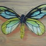Königin-Alexandra-Vogelfalter (Ornithoptera alexandrae)