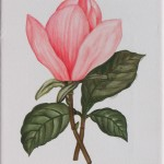 Magnolie (Magnolia species)