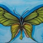 Paradies-Vogelschwingenfalter (Ornithoptera paradisea)