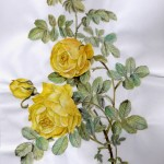 Rose (Rosa sulfurea)