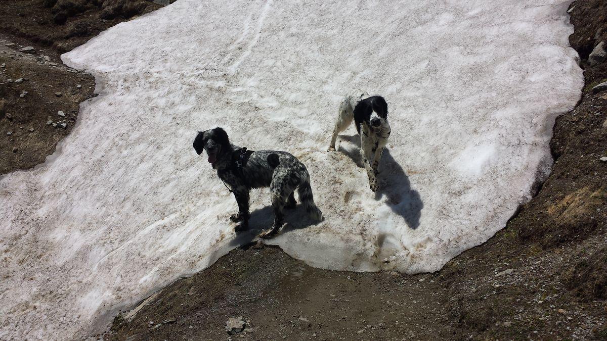 Viecher im Schnee