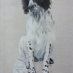 Haushund 'Léon' (Canis lupus familiaris)