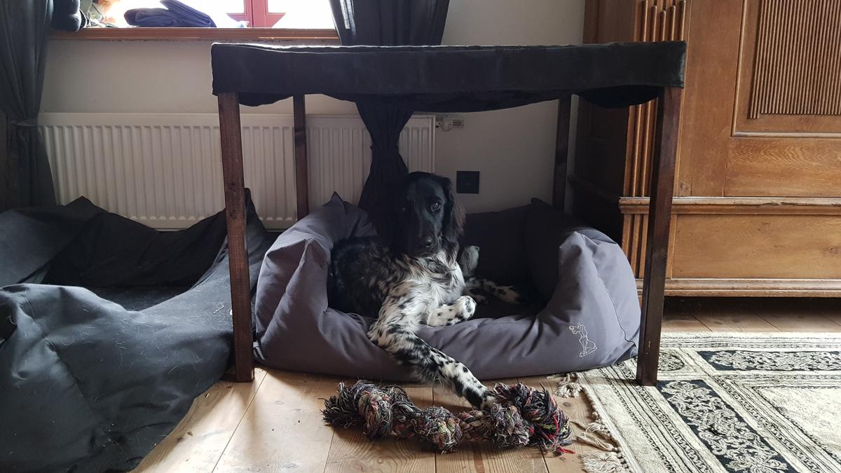 Lara im Hundebett mit Baldachin