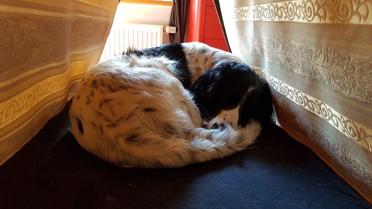 Leon liegt im Hundezeltbett