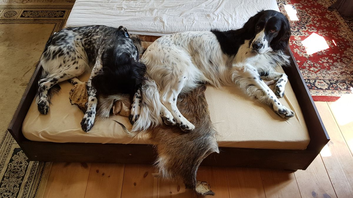 Lara und Leon liegen im Hundebett