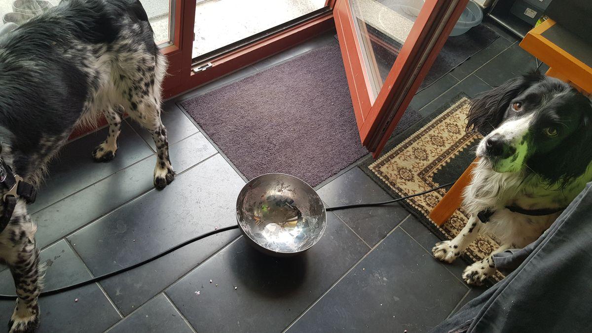 Körniger Frischkäse mit Rote Bete und zwei Hunden